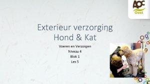 Exterieur verzorging Hond Kat Voeren en Verzorgen Niveau