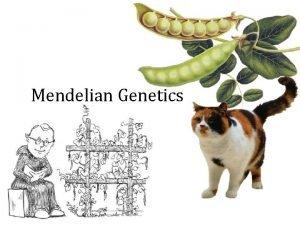 Mendelian Genetics Gregor Mendel Experiments in Plant Hybridization