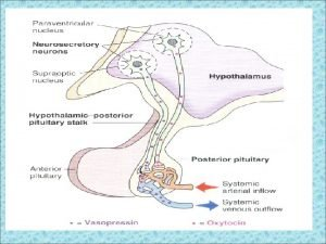 THE POSTERIOR PITUITARY GLAND The posterior pituitary gland
