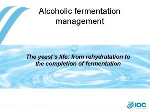 Alcoholic fermentation management The yeasts life from rehydratation
