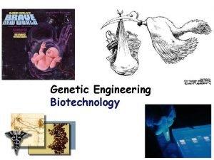 Genetic Engineering Biotechnology 2006 2007 Genetic Engineering Process