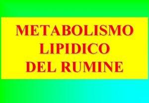 METABOLISMO LIPIDICO DEL RUMINE METABOLISMO LIPIDICO NEL RUMINE