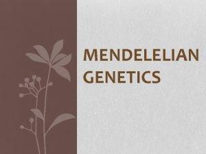 MENDELELIAN GENETICS 1 Gregor Mendel father of Genetics