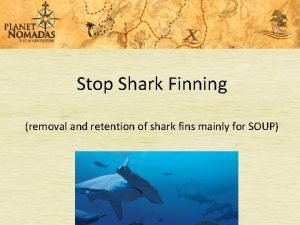 Stop Shark Finning removal and retention of shark
