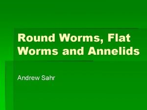 Round Worms Flat Worms and Annelids Andrew Sahr