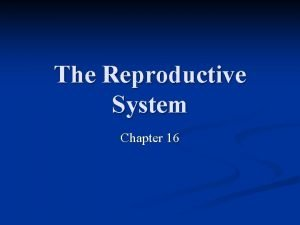 The Reproductive System Chapter 16 The Reproductive System