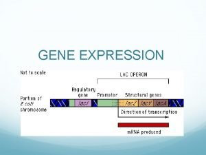 GENE EXPRESSION CONSTITUTIVE GENE PRODUCTS ARE NEEDED BY