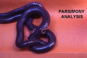PARSIMONY ANALYSIS Genetic Relationships Genetic relationships exist between