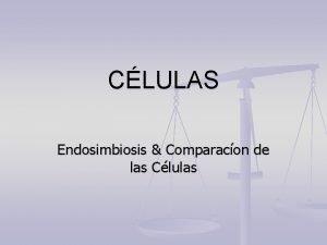 CLULAS Endosimbiosis Comparacon de las Clulas n Recuerde