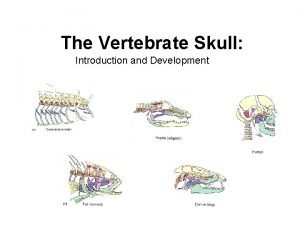 The Vertebrate Skull Introduction and Development Introduction The