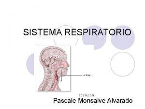 SISTEMA RESPIRATORIO Pascale Monsalve Alvarado Sistema Respiratorio l