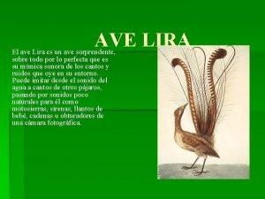 AVE LIRA El ave Lira es un ave