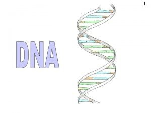 1 DNA 2 DNA stands for deoxyribose nucleic