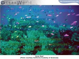 Coral Reef Mangrove Swamps What are coral reefs