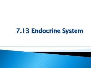 7 13 Endocrine System 7 13 Endocrine System