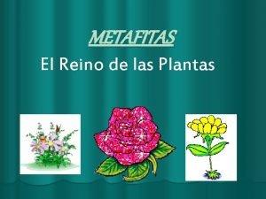 METAFITAS El Reino de las Plantas Caractersticas Generales