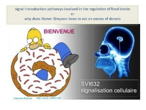 signal transduction pathways involved in the regulation of