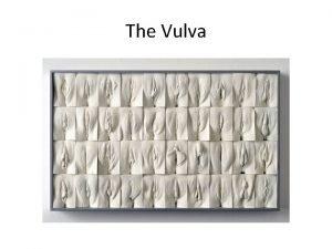 The Vulva Terminology Normal Anatomy Normal Anatomy Symptoms