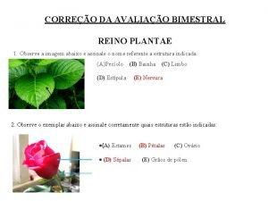 CORREO DA AVALIAO BIMESTRAL REINO PLANTAE 1 Observe