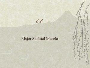 8 8 Major Skeletal Muscles What muscle names