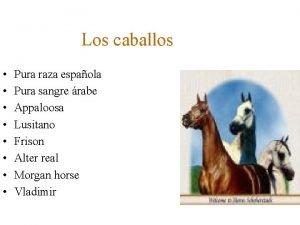 Los caballos Pura raza espaola Pura sangre rabe