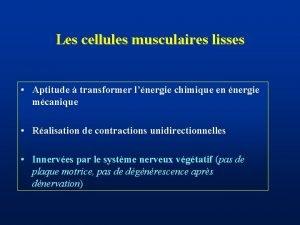 Les cellules musculaires lisses Aptitude transformer lnergie chimique