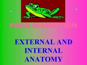 FROG DISSECTION EXTERNAL AND INTERNAL ANATOMY EXTERNAL ANATOMY