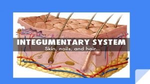 Layers and Functions Layers Functions 1 Epidermis stratified