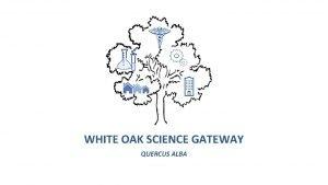 WHITE OAK SCIENCE GATEWAY QUERCUS ALBA White Oak