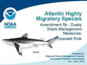 Atlantic Highly Migratory Species Amendment 5 b Dusky
