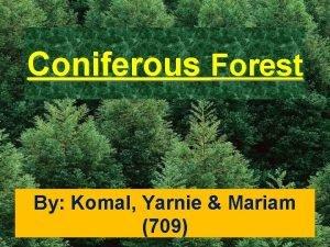 Coniferous Forest By Komal Yarnie Mariam 709 Animal