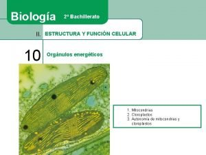 Biologa 2 Bachillerato II ESTRUCTURA Y FUNCIN CELULAR
