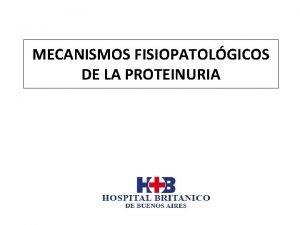 MECANISMOS FISIOPATOLGICOS DE LA PROTEINURIA La pared capilar