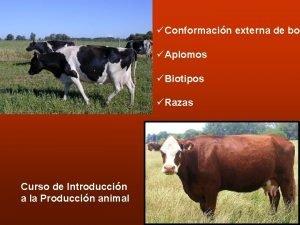 Conformacin externa de bov Aplomos Biotipos Razas Curso
