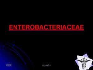 ENTEROBACTERIACEAE 1222020 alen vukeli dr 1 MORFOLOGIJA GRAM