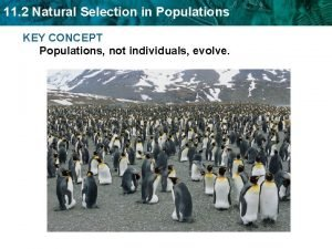 11 2 Natural Selection in Populations KEY CONCEPT