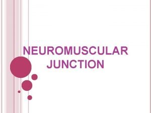 NEUROMUSCULAR JUNCTION IT IS THE JUNCTION BETWEEN A
