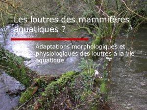 Les loutres des mammifres aquatiques Adaptations morphologiques et