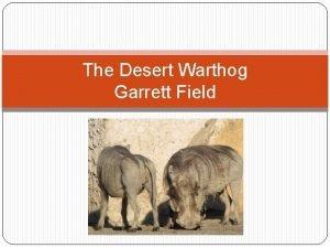 The Desert Warthog Garrett Field Classification q The