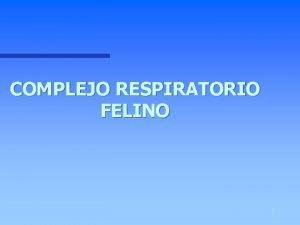 COMPLEJO RESPIRATORIO FELINO 1 COMPLEJO RESPIRATORIO FELINO n
