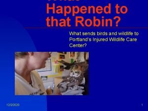 What Happened to that Robin What sends birds
