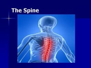 The Spine Structure and Function of the Spine