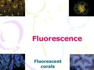 Fluorescence Fluorescent corals Jablonski Diagram Fluorescence From v