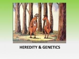Heredity Genes HEREDITY GENETICS Biological Traits and Heredity