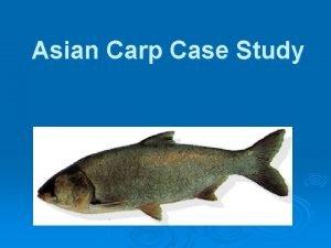 Asian Carp Case Study The Asian Carp An