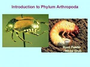 Introduction to Phylum Arthropoda Phylum Arthropoda Segmented body