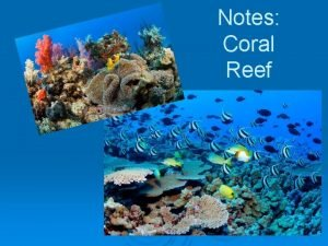Notes Coral Reef Characteristics Coral reefs are massive