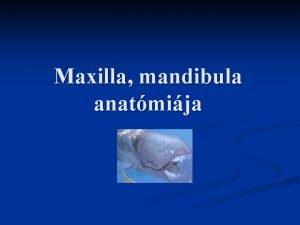 Maxilla mandibula anatmija Mandibula Fogas s fogatlan mandibula