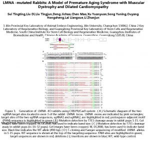 LMNA mutated Rabbits A Model of Premature Aging