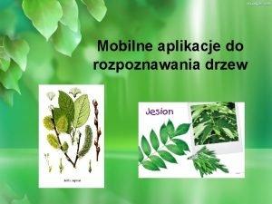 Mobilne aplikacje do rozpoznawania drzew Sposoby rozpoznawania drzew